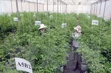 Đối thoại doanh nghiệp ngành nông nghiệp Việt Nam-Nhật Bản