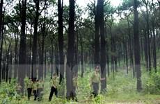 Đắk Nông: Bắt Giám đốc công ty bị truy nã vì lừa bán đất rừng