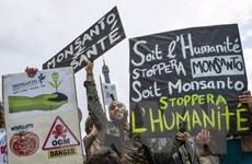 15 quốc gia EU tham gia luật cấm sản phẩm nông nghiệp biến đổi gen