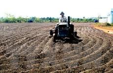 Sắp xếp, đổi mới công ty nông lâm nghiệp 4 tỉnh Tây Nguyên