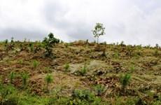 Lâm Đồng xử lý các tập thể, cá nhân phá rừng, chiếm đất lâm nghiệp