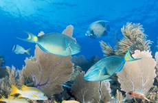 Cuba và Mỹ ký thỏa thuận hợp tác đầu tiên về môi trường