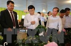 Chủ tịch nước khảo sát mô hình nông nghiệp công nghệ cao ở Lâm Đồng