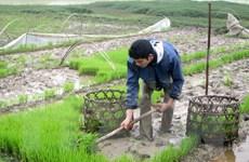 Bàn giải pháp triển khai vụ Đông Xuân trong thời tiết ấm