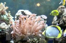 Ứng dụng công nghệ viễn thám giám sát tài nguyên môi trường biển đảo