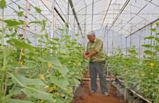 New Zealand hỗ trợ Bình Định hơn 1 triệu USD để trồng rau an toàn