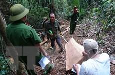 """Lâm Đồng: Tăng cường lực lượng truy bắt trùm lâm tặc """"Hà Đen"""""""
