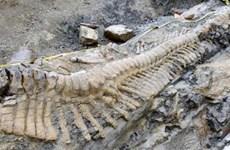 Phát hiện hóa thạch khủng long ăn thịt lớn nhất từ trước tới nay
