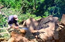 Điện Biên xử lý nghiêm khai thác rừng trái phép tại Tủa Chùa