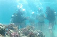Bảo vệ rạn san hô gắn với phát triển du lịch biển Bình Định
