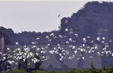 Hải Dương: Độc đáo vườn cò nằm giữa khu dân cư ở Nam Sách