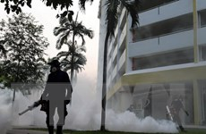 Thêm 15 trường hợp nhiễm virus Zika mới được phát hiện ở Singapore
