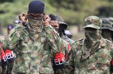 Colombia: ELN tuyên bố ngừng bắn tạo thuận lợi cho trưng cầu dân ý