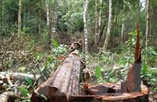 """Đắk Nông vẫn còn tồn tại bốn """"điểm nóng"""" chặt phá rừng"""