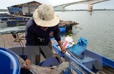 Bà Rịa-Vũng Tàu: Hơn 65 tấn cá nuôi lại chết trên sông Chà Và