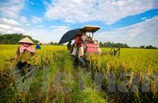 Đề xuất miễn toàn bộ thuế sử dụng đất nông nghiệp