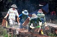 Hà Giang không chấp nhận việc mang ong ngoại vào địa bàn