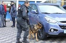 Kosovo chặn đứng âm mưu tấn công Đội tuyển bóng đá Israel