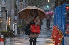 Lần đầu sau hơn nửa thế kỷ, tuyết rơi ở Tokyo vào tháng 11