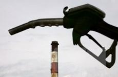 Sản lượng tháng 11 của OPEC lập kỷ lục làm giá dầu giảm trở lại