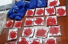 Công an Hải Phòng phá ổ nhóm sản xuất, tàng trữ ma túy khối lượng lớn