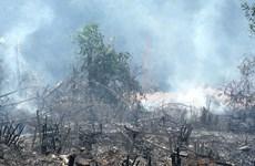 Dân đốt thực bì, cháy rừng lan rộng đe dọa rừng quốc gia Yên Tử