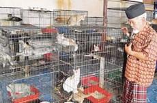 Cặp vợ chồng già bỏ ra hàng chục tỷ đồng để nuôi gần 2.000 chú mèo