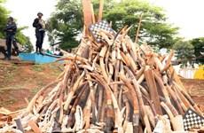 Báo động tình trạng gia tăng tội phạm môi trường trên toàn cầu