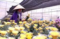 Xúc tiến thành lập Trung tâm giao dịch hoa tại thành phố Đà Lạt
