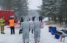 Cộng hòa Séc phát hiện năm ổ dịch cúm gia cầm H5N8