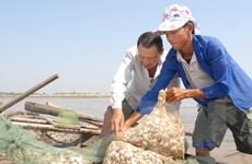 1.100ha ngao chết rải rác tại Ninh Bình không phải do dịch bệnh