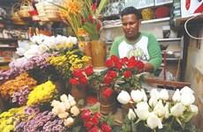 """Hoa hồng """"cháy"""" hàng, giá tăng vọt dịp Lễ Tình nhân ở Malaysia"""