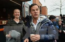 Bầu cử quốc hội Hà Lan và nguy cơ chủ nghĩa dân túy thắng thế