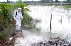 Tập trung phòng chống virus cúm gia cầm có khả năng lây sang người
