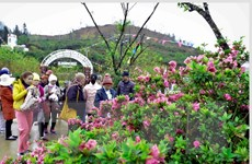 """Độc đáo Lễ hội hoa đỗ quyên trên """"nóc nhà Đông Dương"""""""