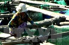 Thừa Thiên-Huế: Cá nuôi lồng bè trên sông Bồ chết hàng loạt