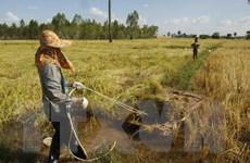 Campuchia đề nghị Philippines đầu tư nhiều vào sản xuất, thu mua gạo