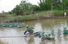Thủ tướng: Trà Vinh cần đầu tư phát triển nuôi tôm thâm canh