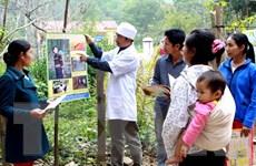 Bệnh sốt rét đang có nguy cơ bùng phát trở lại tại Việt Nam