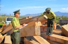 Lợi dụng vận chuyển gỗ tang vật để trà trộn gỗ lậu đi tiêu thụ