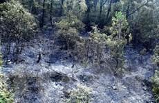 Cháy rừng trên núi đá vôi tại Quần thể danh thắng Tràng An