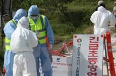 Hàn Quốc đã phát hiện thêm một ổ dịch cúm gia cầm H5N8