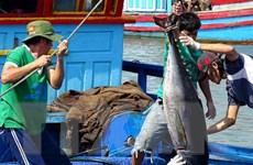 VASEP kiến nghị các giải pháp nhằm thúc đẩy xuất khẩu cá ngừ