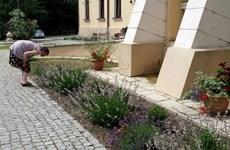 Điều trị bệnh thần kinh thông qua hoạt động làm vườn