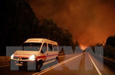 50 người thương vong trong vụ cháy rừng khủng khiếp ở Bồ Đào Nha
