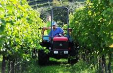 Ngành sản xuất rượu vang của châu Âu đối mặt với nhiều thách thức