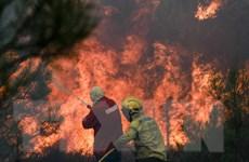 Bồ Đào Nha ban bố tình trạng thảm họa do cháy rừng tiếp diễn