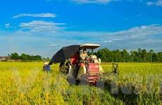 Cải cách ngành lúa gạo Việt Nam theo định hướng thị trường
