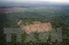 Phát hiện hơn 380 loài sinh vật mới tại rừng nhiệt đới Amazon