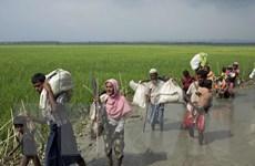 Gần 300.000 người Myanmar sang Bangladesh lánh nạn chỉ trong 2 tuần